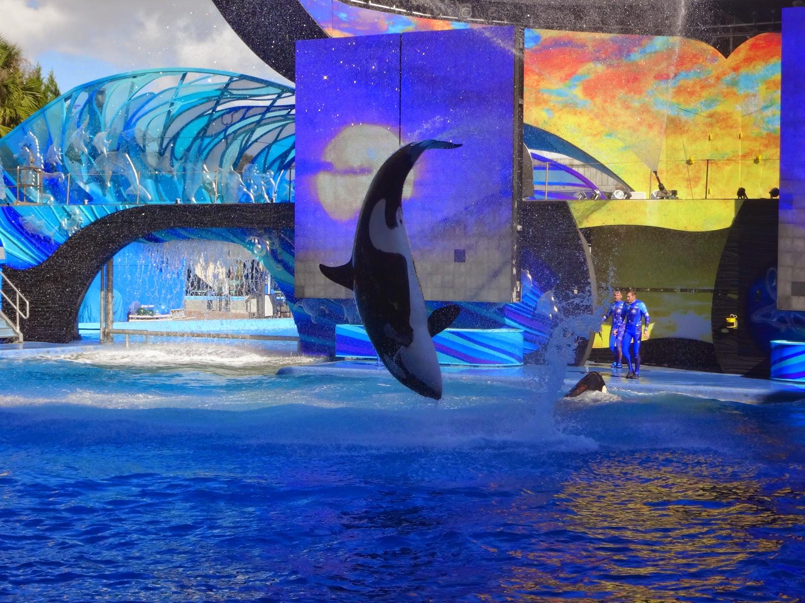 shamu adventure - Parque sea world - orlando, florida