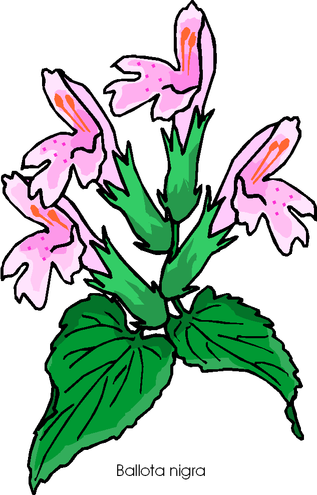Ballota Nigra Free Flower Clipart