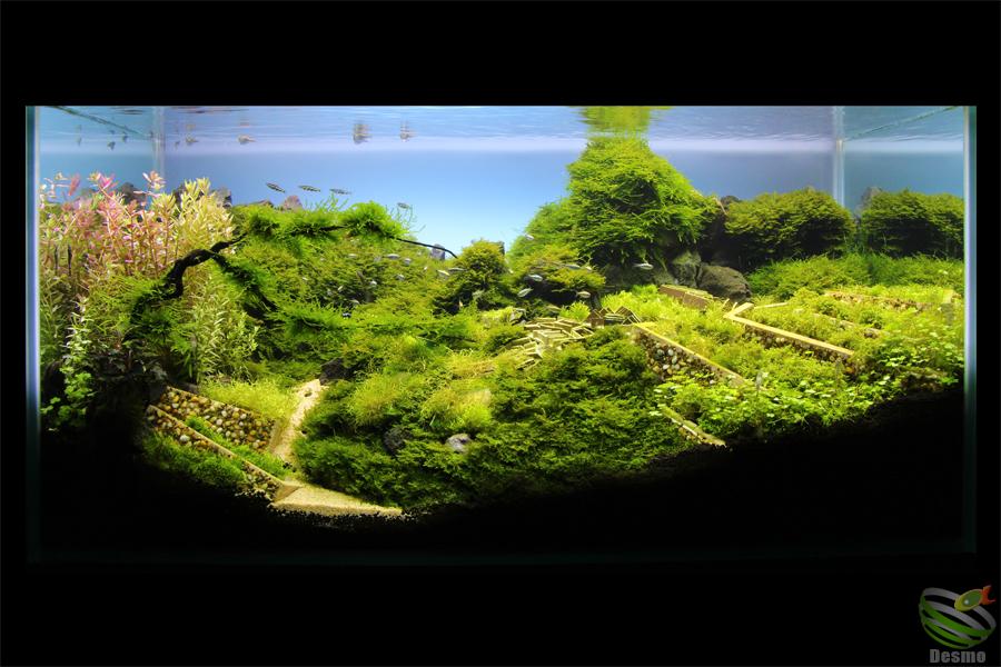 マチュピチュレイアウト水槽