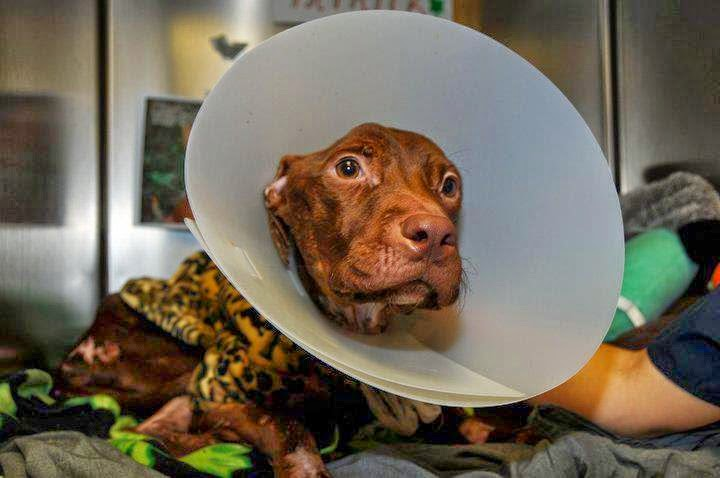 This Abused Starved Dog Was Thrown Down A Trash Chute. Then A Miracle Happened!
