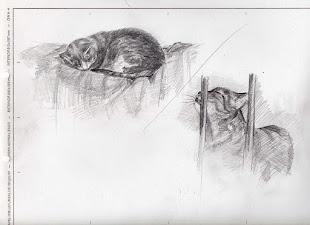 Mis gatos II