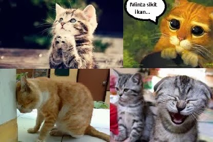 Kucing-Terwujud.com