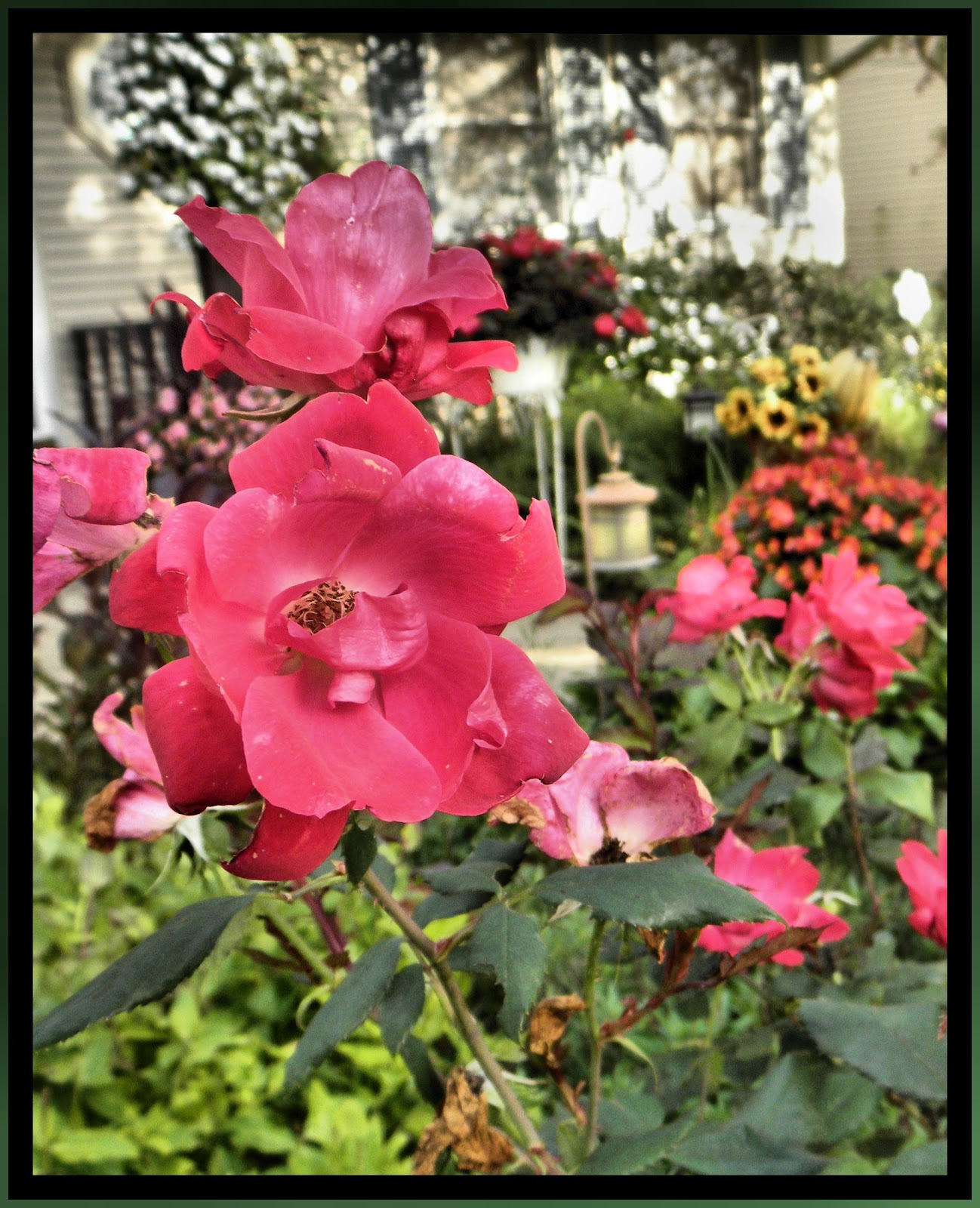 Christian Images In My Treasure Box: Beautiful Photos Of The Garden ...