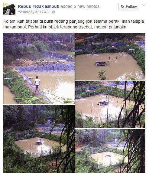 ikan talapia dari kawasan sekitar sehingga pihak berkuasa mengeluarkan