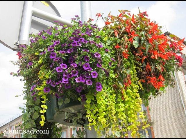 подвесные, кашпо, контейнеры, ящики, для цветов, сочетание, растений, цветов, уличные кашпо, садовые, клумбы, растения для контейнеров
