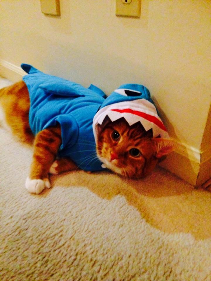 Shark Ripple