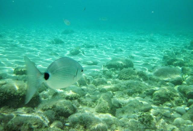 snorkel en ibiza