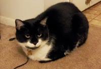 Seph the tuxedo cat is not happy.