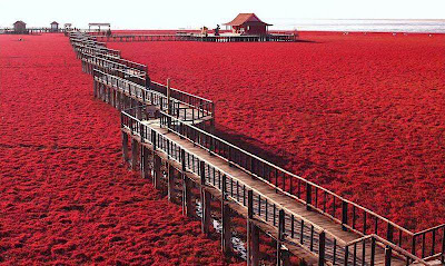 Red Seabeach China