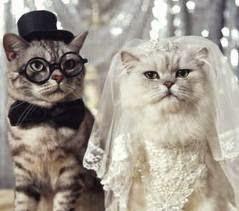 Perbedaan Tingkah Laku Kucing Persia Anggora Jantan dan Betina