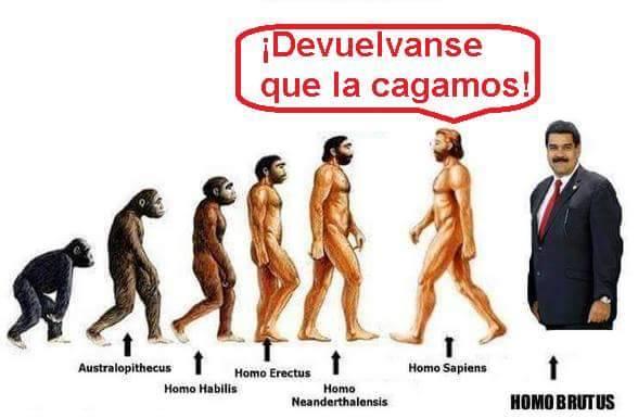 Homo brutus