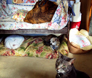 Cat and Dog Friendship cat dog