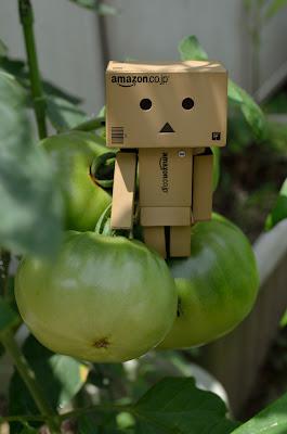 ダンボー 青いトマト 3