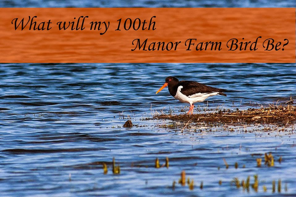 What will my 100th Manor Farm bird be?