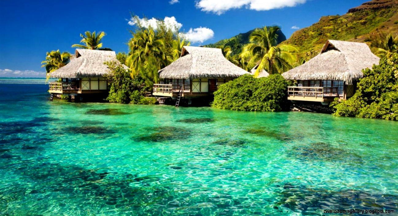 tropical landscape wallpaper   images