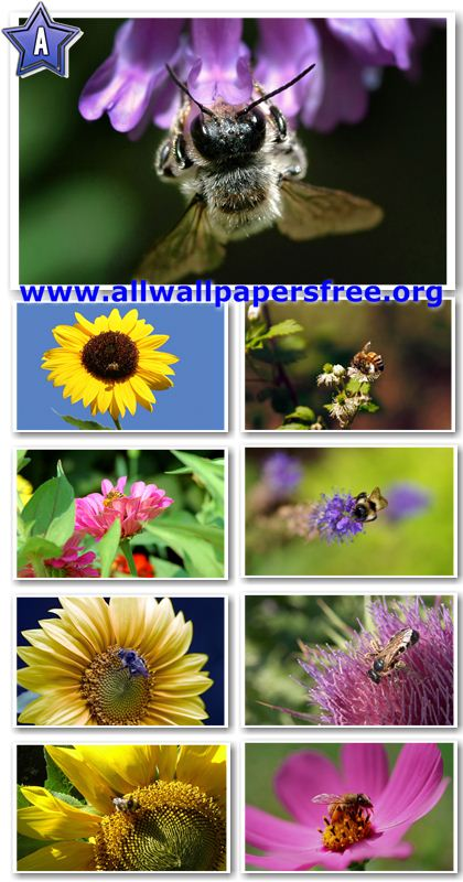 40 Amazing Insects Wallpapers 1920 X 1200 [Set 1]
