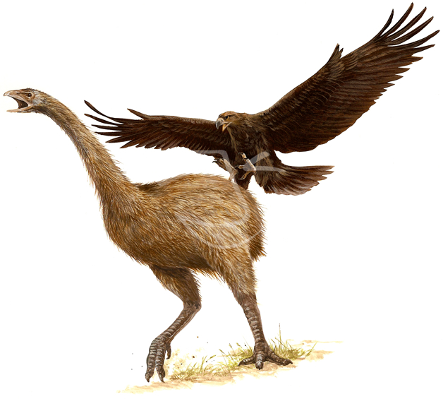 JURASSIC GIANTS: HAAST'S EAGLE