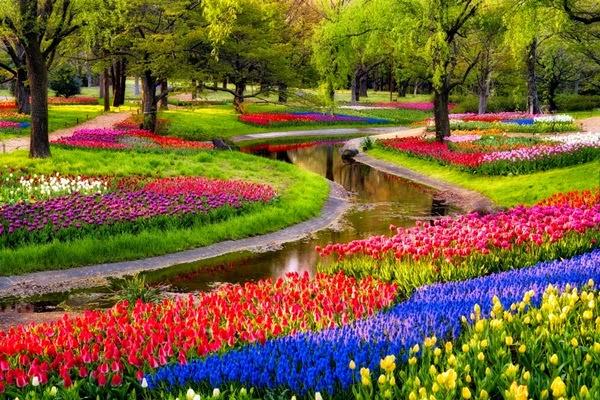 flores no jardim frases : flores no jardim frases:Flores e Frases : tulipas para ornamentar grandes áreas e jardins