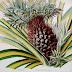 Ananas jadalny - opis i uprawa