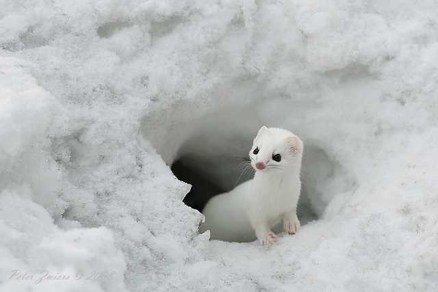 animals in snow, adorable animals in snow, animals playing in the snow, wonderful pictures of animals