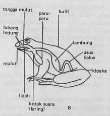 katak.png