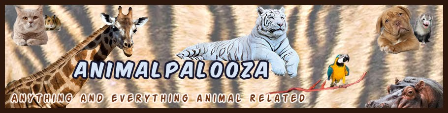AnimalPalooza