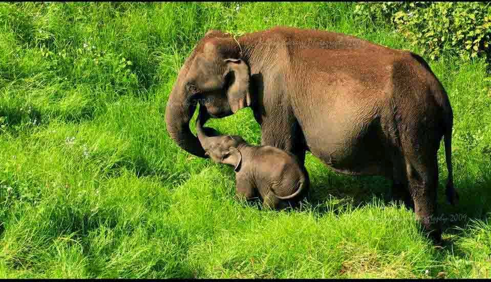 essay on conservation of endangered animals Conservation of indian wildlife was not given the requisite importance for a long time need essay sample on conservation of wildlife endangered animals pg.