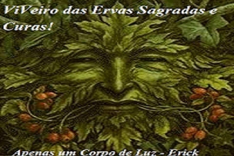 Viveiro das Ervas e Folhas Sagradas e Cura