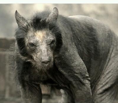 FOTO TË MUAJIT PRILL - Faqe 2 Bears-It%27s-not-the-same