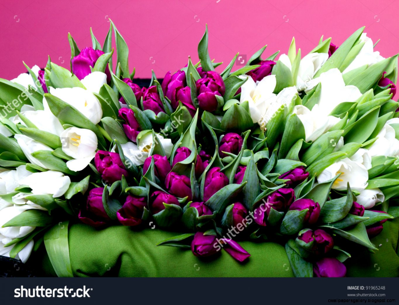 Purple And White Tulips On Black Chair With Green Cushion Stock
