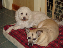 Miley Coyote and Sammy Girl-She is his rock!