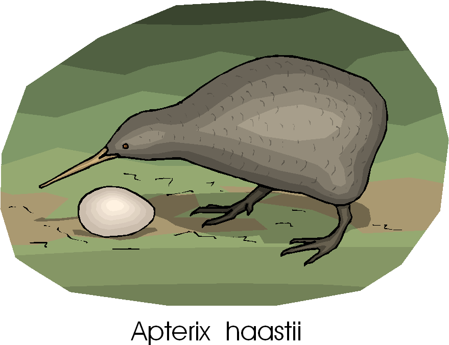 Great Spotted Kiwi | Apterix Haastii Free Animal Clipart