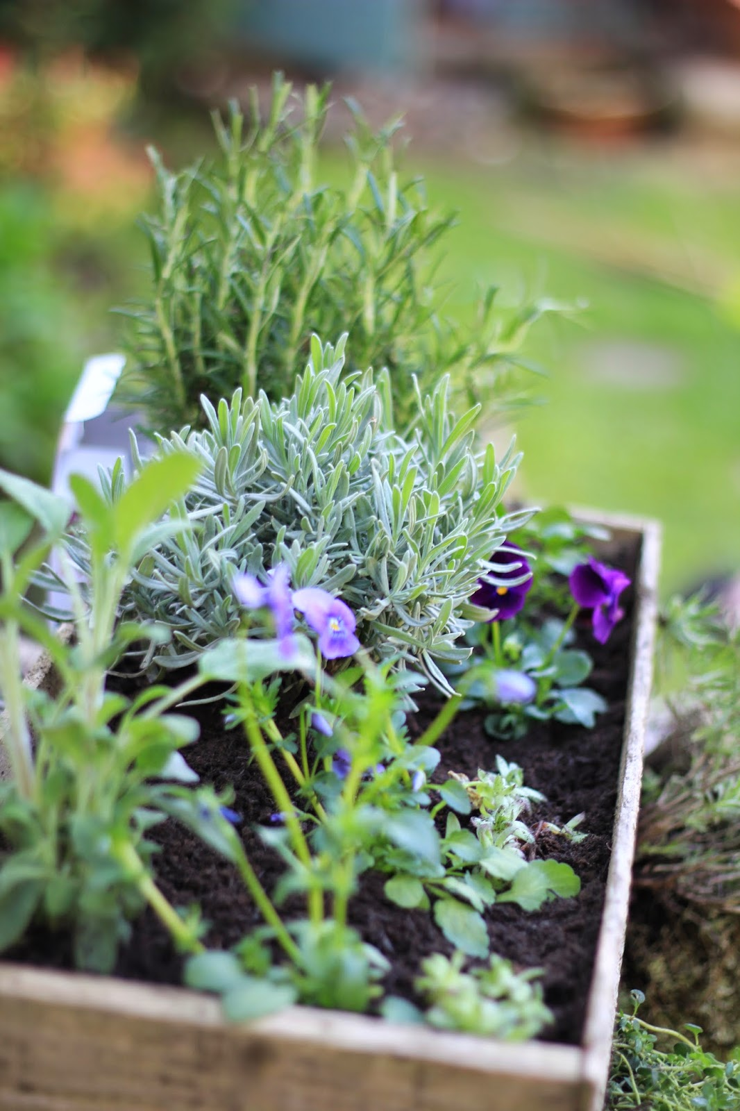 A guide to growing herbs