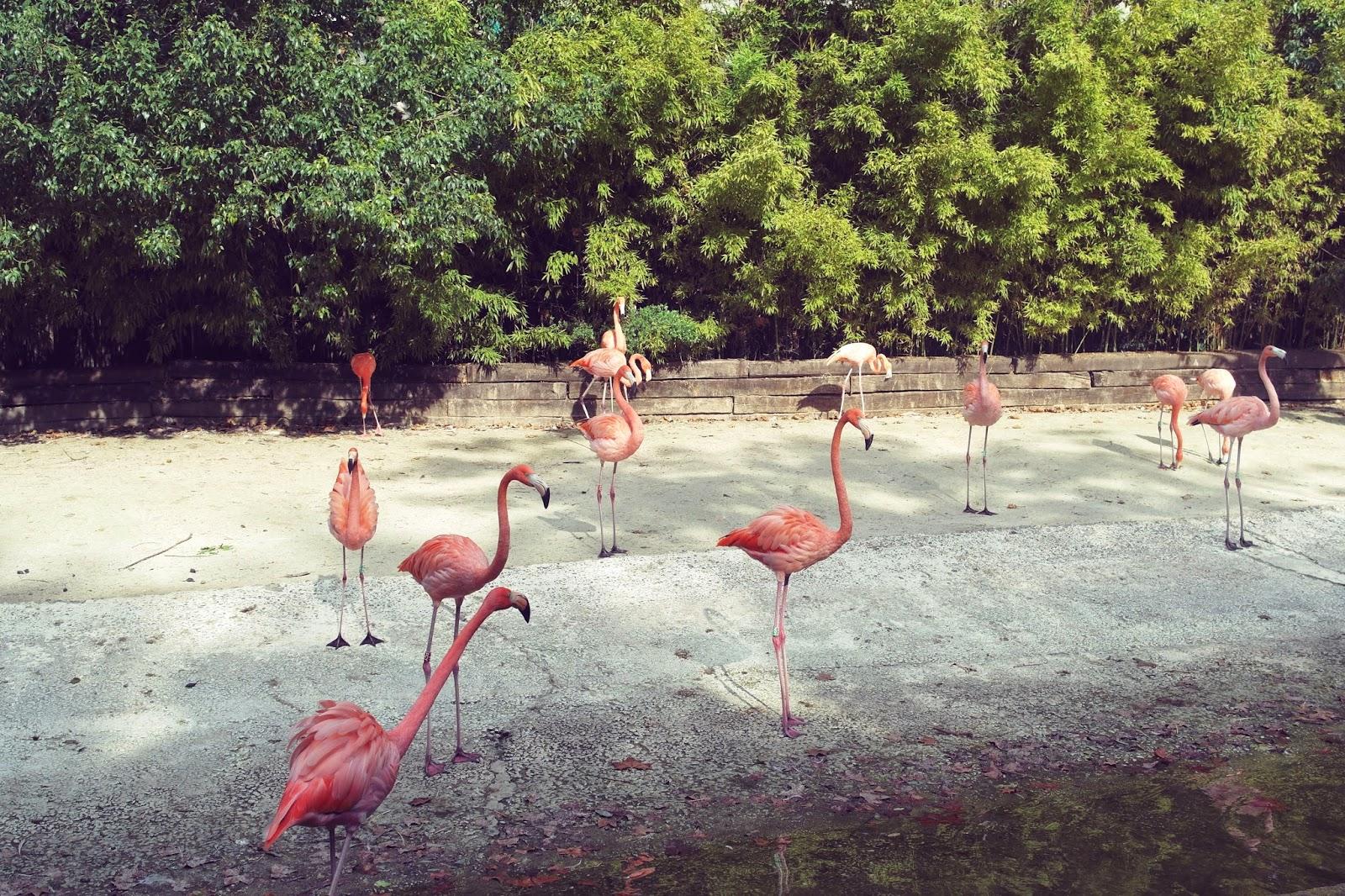 barcelona zoo flamingos