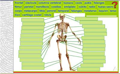 http://www.ceipjuanherreraalcausa.es/Recursosdidacticos/SEXTO/Conocimiento/u04/0403.htm