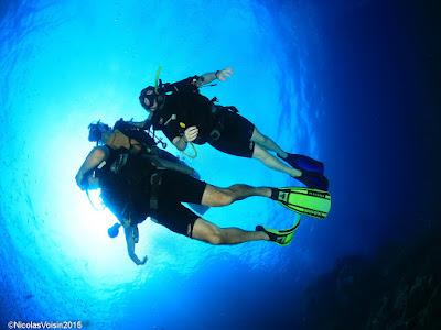 500 logged dives at Sail Rock