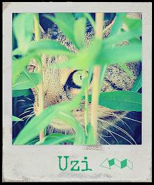 Uzi +