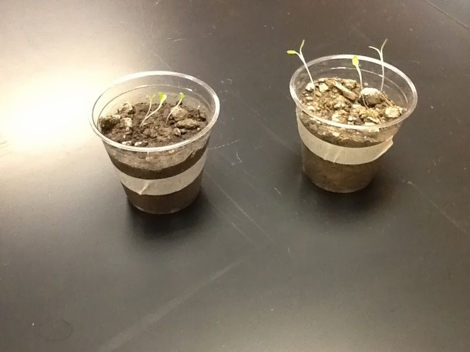 soil lab This program is designed as a soil-management tool for farmers, homeowners, landscape contractors, golf-course superintendents, ornamental nurserymen and others interested in the fertility of their soil and in determining the optimum lime and fertilizer requirements of their crop.