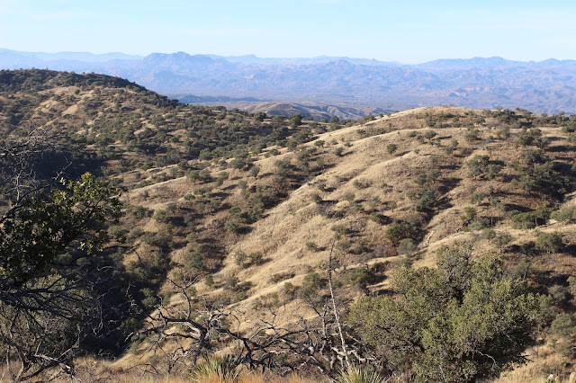Coues%2BDeer%2BCountry%2Bwhile%2Bglassing%2Bin%2Bsonora%2Bmexico%2Bwith%2Bcolburn%2Band%2Bscott%2Boutfitters%2B2.JPG