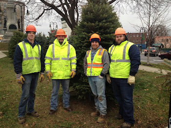 DPW Workers Put Up Christmas Trees on the Square