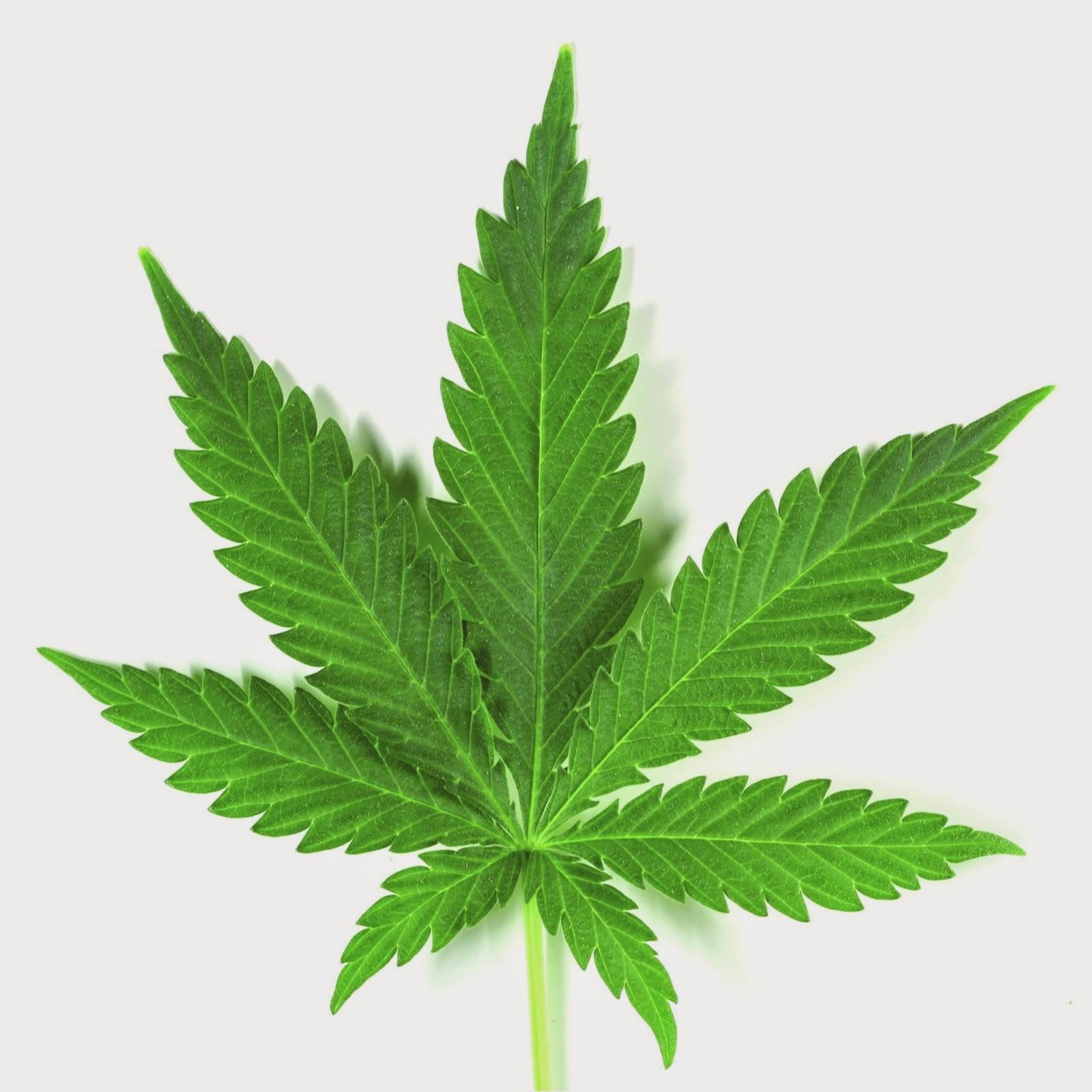 Emprender con marihuana