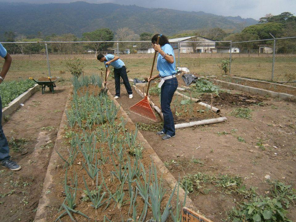 Aprendamos horticultura vivero for Actividades de un vivero