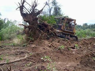 Cambio climático: deforestación.