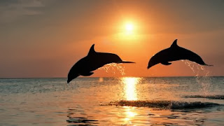 Top interesting facts about Dolphins