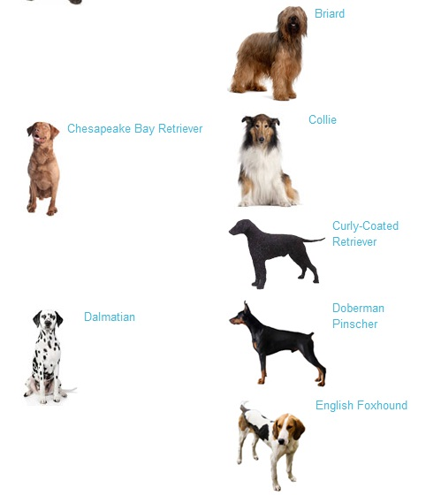 large dog breeds large dogs breeds large dogs breeds large dog breeds