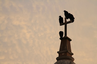 Birds on Crosses – Symbolic?