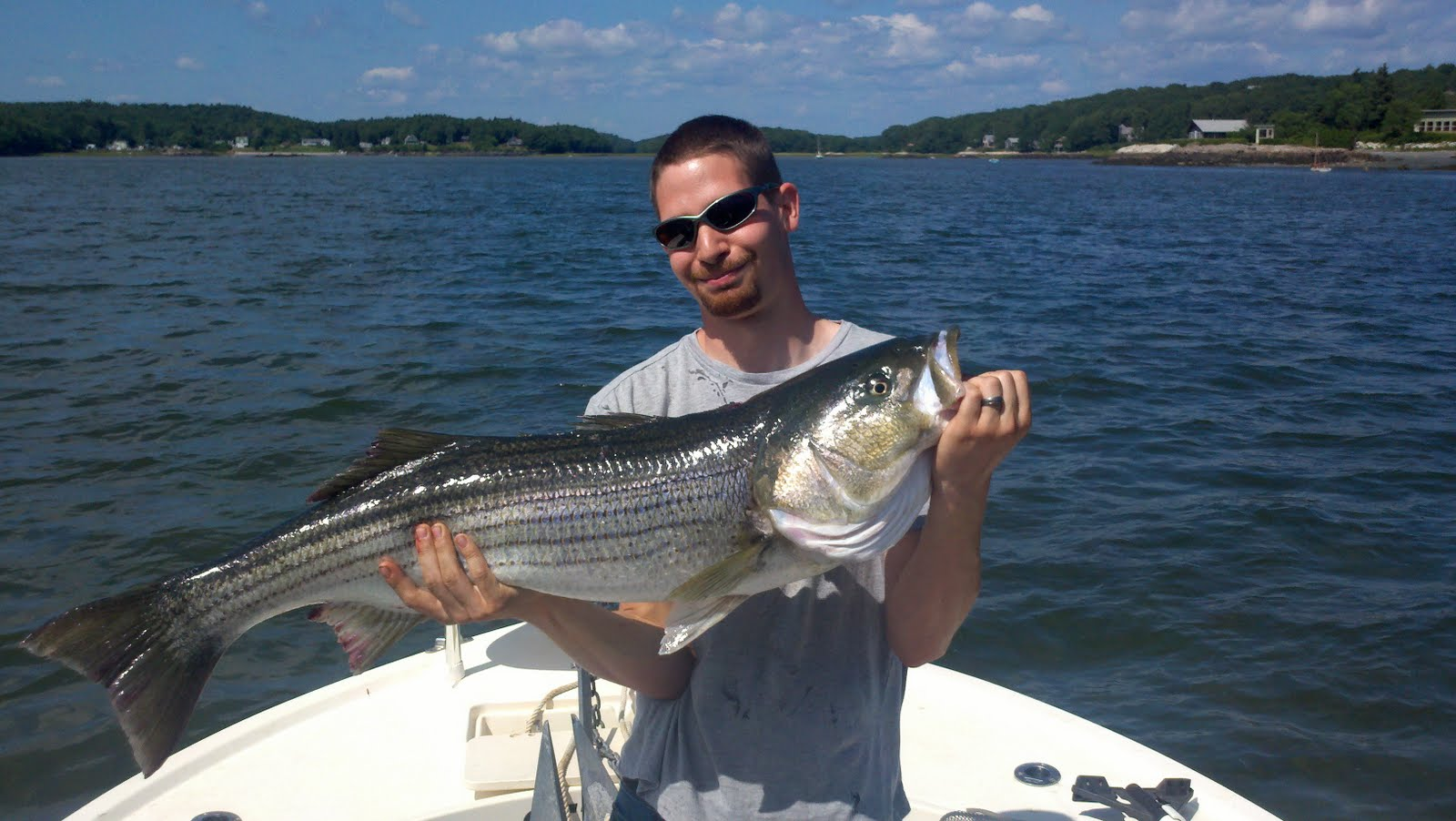 maine striper fishing charters reports hotline 207 691