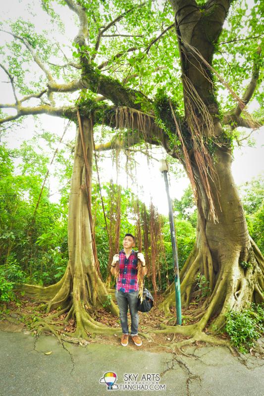 Greenery at Guia Hill