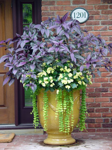 1000 images about trailing cascading spiller plants for baskets or windowboxes on pinterest - Container gardens for sun ...