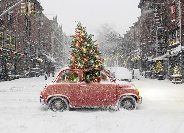 Christmas+Tree+Transport